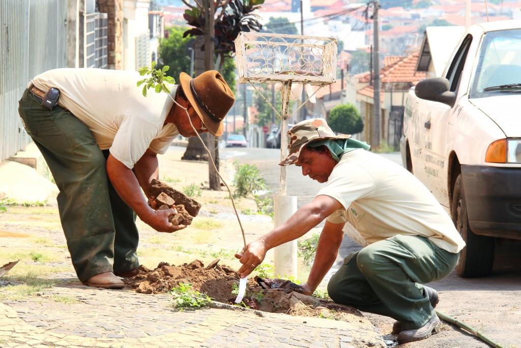 Funcionários plantam muda de árvore em Santa Bárbara (SP) - Divulgação